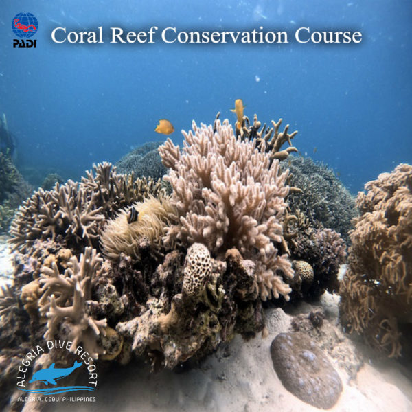PADI Coral Reef Conservation Course